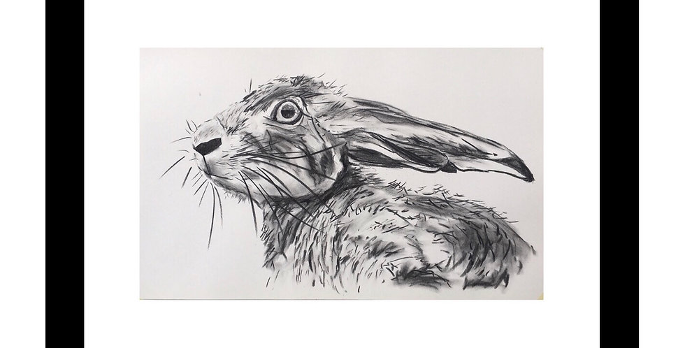 Charcoal Hare No.2