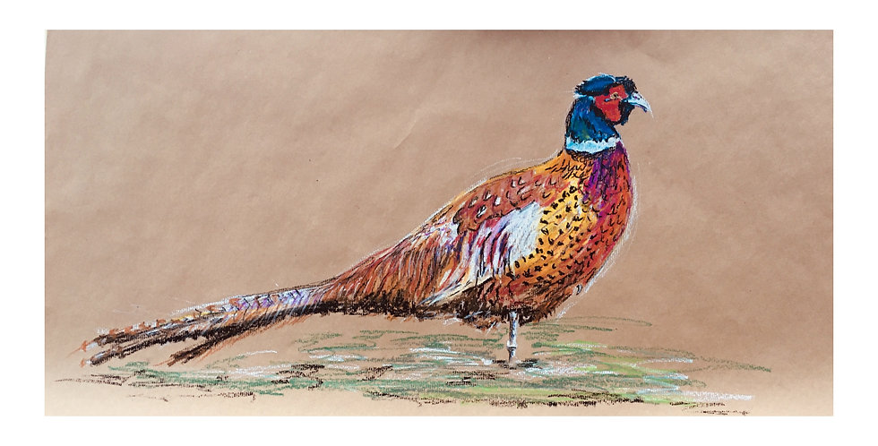 Pheasant No.1