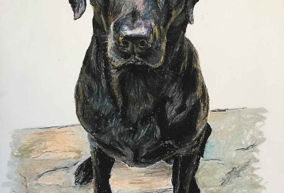 Layla The Labrador