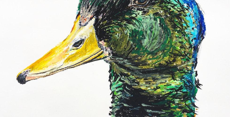Daniel The Duck