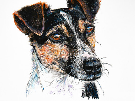 Commission an Original Drawing of your Dog