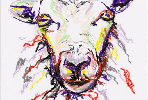 Samantha The Sheep