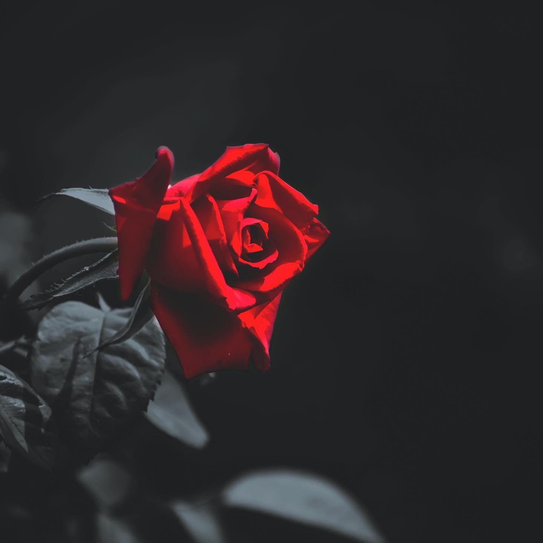 Rose Reading
