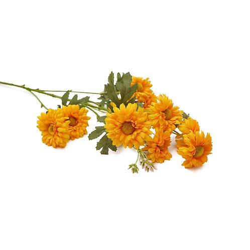 野菊(橙)
