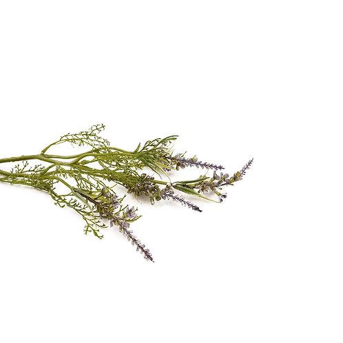 鼠尾草(紫)