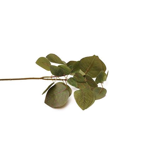 紫錦木(綠)