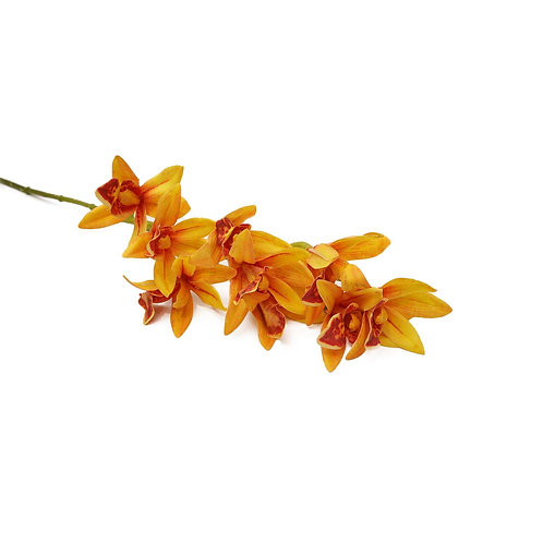 小蕙蘭(橙黃)