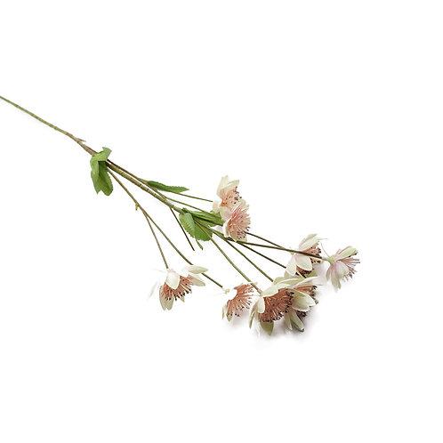 小蓮花(粉白)