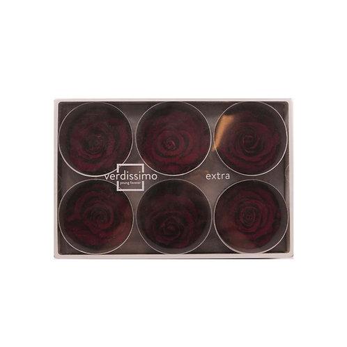 Verdissimo西班牙保鮮花 大玫瑰 6粒/盒