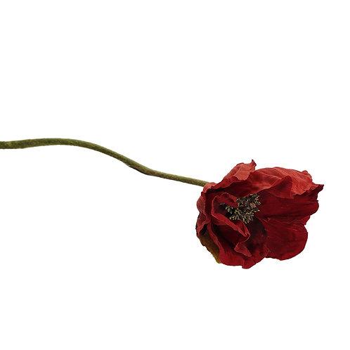 罌粟花(紅)