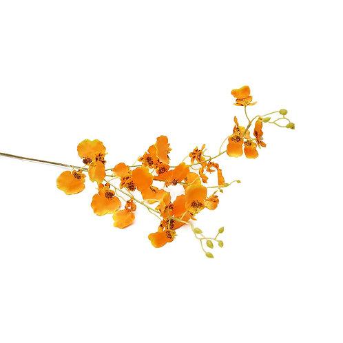 跳舞蘭(橙)