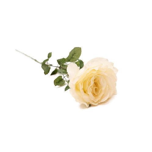 玫瑰(米白)