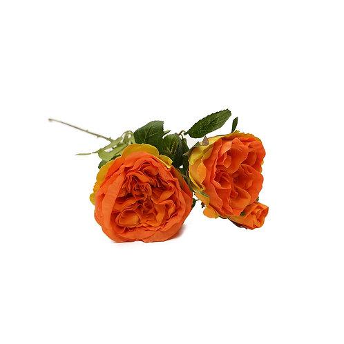 庭園玫瑰(橙)