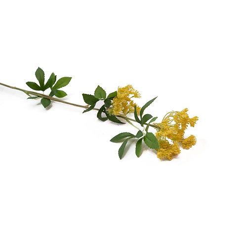 茴香(黃)