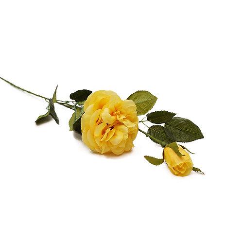 庭園玫瑰(黃)