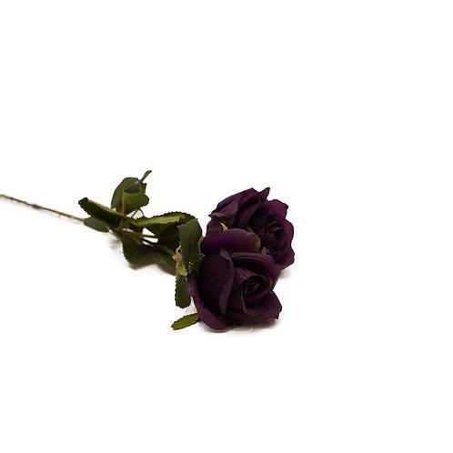 重瓣桔梗(深紫)