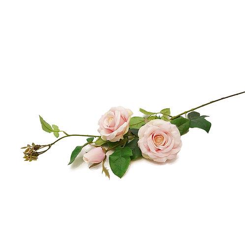 玫瑰(粉)