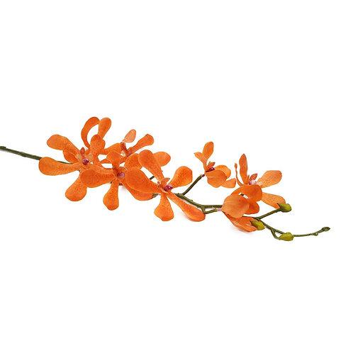 胡姬(橙)