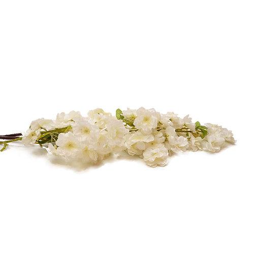 櫻花(白)