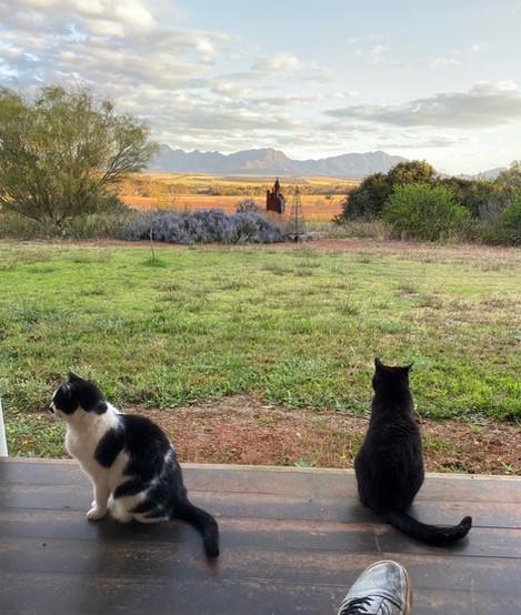 Jill OMeehan studio cats (5).JPG