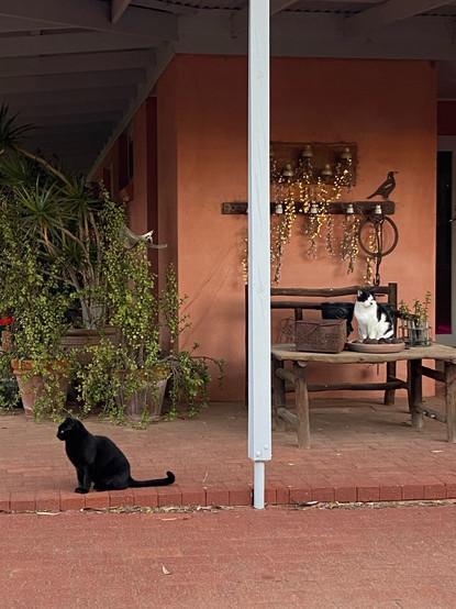 Jill OMeehan studio cats (6).JPG