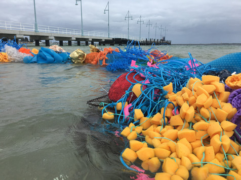 Jill OMeehan Sea Weed Beds 2017 (26).JPG