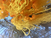 Jill OMeehan yellow jellyfish (1).jpg