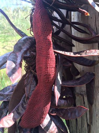 Jill OMeehan Gleditsia seed pods (4).jpg