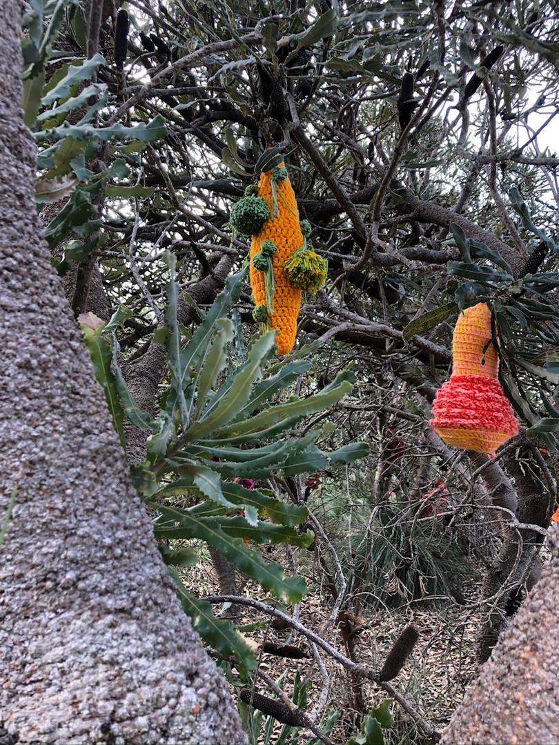 Jill OMeehan tree trail stirling (18).JP