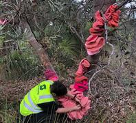 Jill OMeehan tree trail stirling (6).jpg