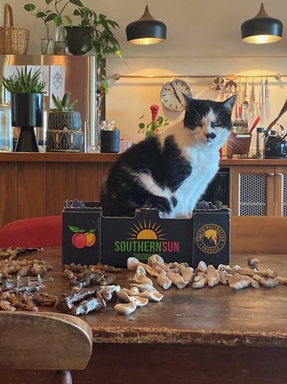 Jill OMeehan studio cats (8).JPG