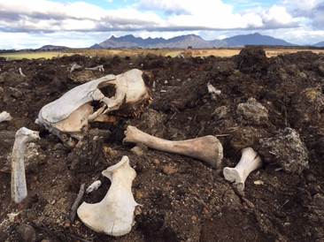 Jill OMeehan Momento Mori bone yard (4).