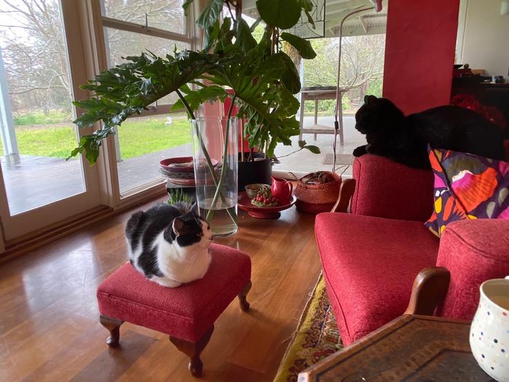 Jill OMeehan studio cats (3).JPG