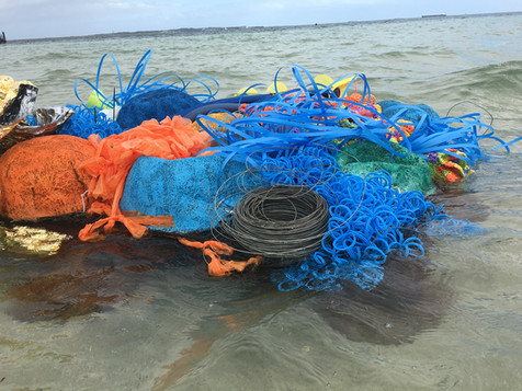Jill OMeehan Sea Weed Beds 2017 (29).JPG