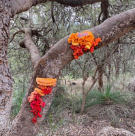 Jill OMeehan tree trail stirling (7).jpg