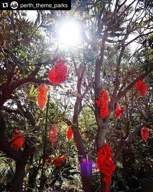 Jill OMeehan tree trail stirling (11).jp