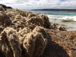 Jill Omeehan crochet forms marine (9).jp