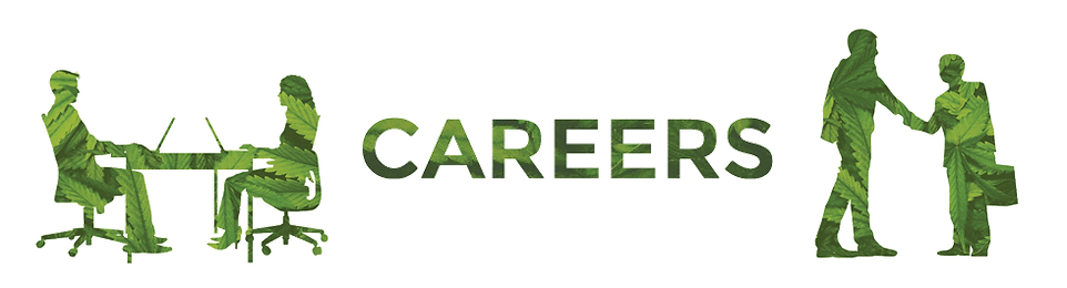 Daily Marijuana Observer Careers