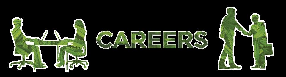Daily Marijuana Observer Careers