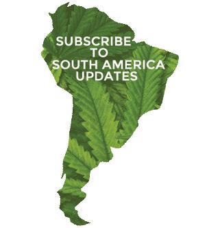 South American Cannabis News