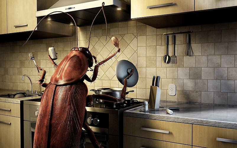 roaches.png