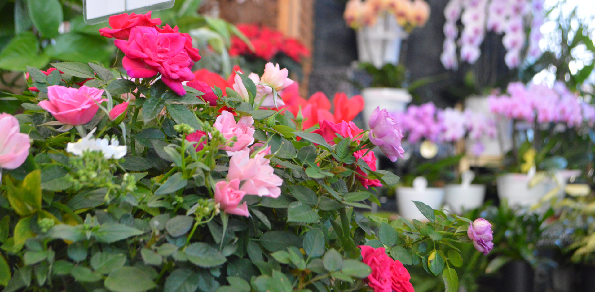 florist_2.JPG