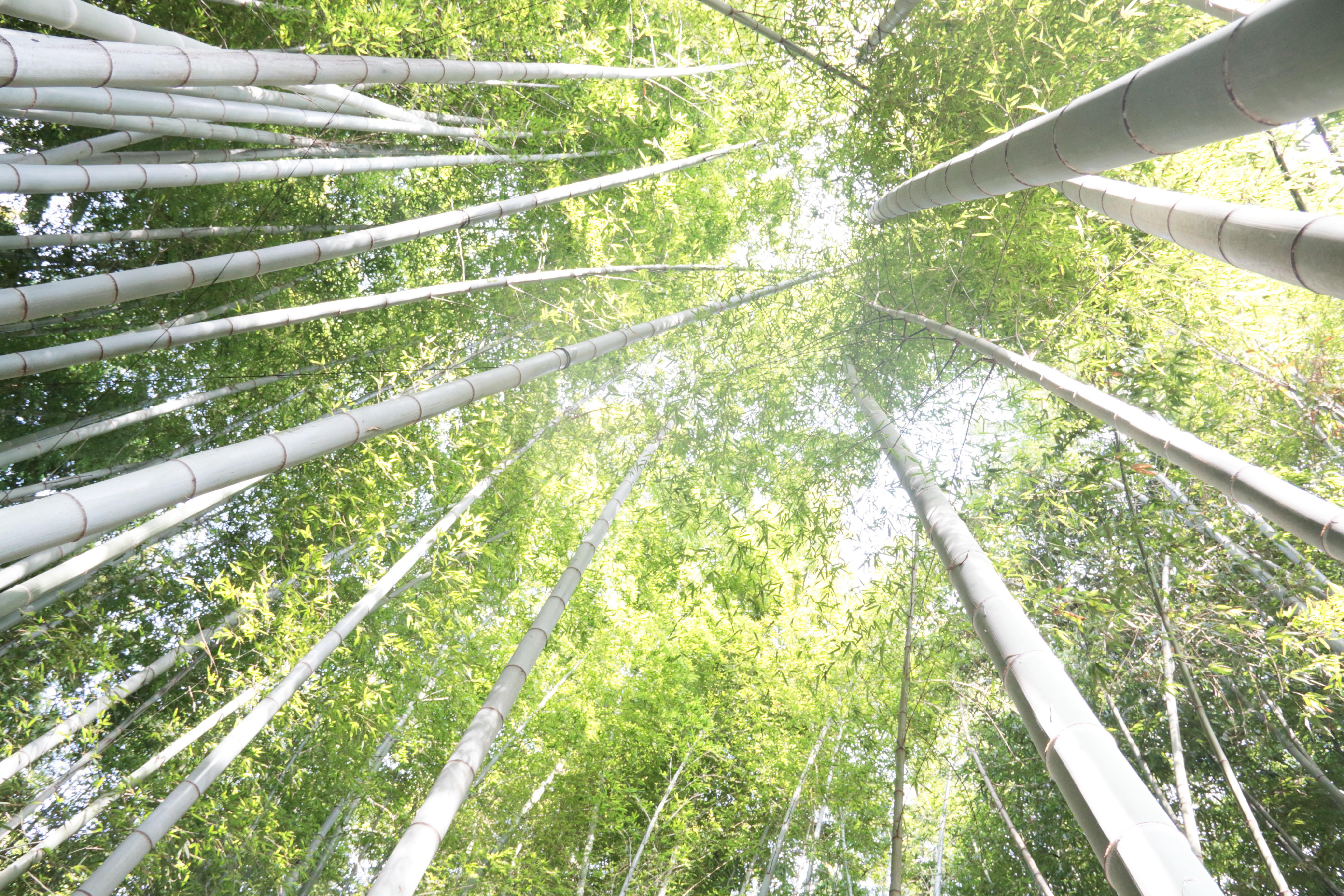 2014.07.10 Kanagawa