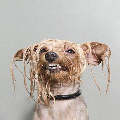 wet dog.jpg