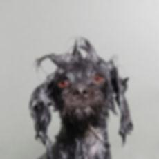 wet-dog-3.jpg