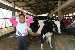 Kamal bei den Kühen