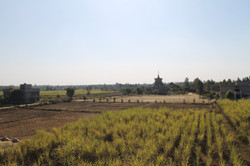 Felder in Ashadeep