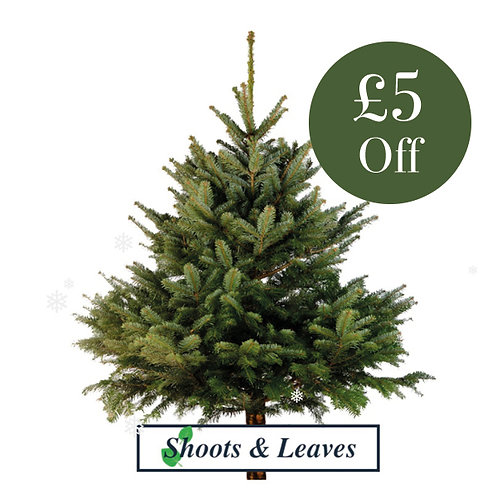 £5 off your Shoots and Leaves Christmas Tree