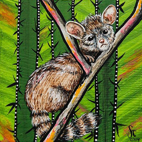 Ring-tailed Cat - AZ State Series