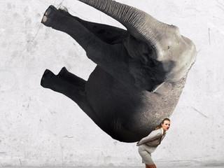 Kan jij een olifant dragen? Of voel je je wel eens een pakezel?